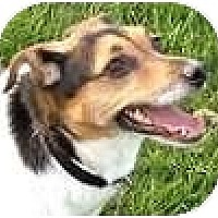 Adopt A Pet :: Jaycee - Hamilton, ON