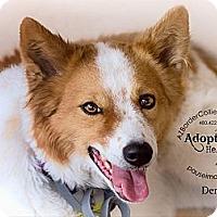 Adopt A Pet :: Derry - Tempe, AZ