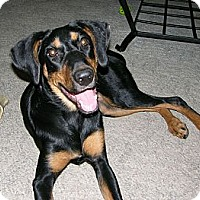 Adopt A Pet :: Holly--courtesy post - New Richmond, OH