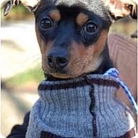 Adopt A Pet :: BOONE (a/k/a