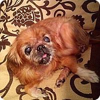 Adopt A Pet :: Sunshine - Portland, ME