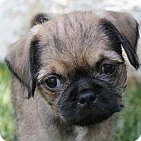 Adopt A Pet :: Oscar - La Habra Heights, CA