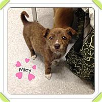 Adopt A Pet :: Miley - Saskatoon, SK