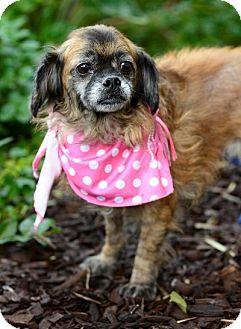 Terrier (Unknown Type, Medium)/Spaniel (Unknown Type) Mix Dog for adoption in San Pedro, California - Ellie