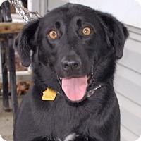 Adopt A Pet :: Jett - Cincinnati, OH
