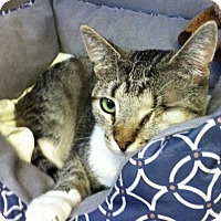 Adopt A Pet :: Peepers - Trevose, PA