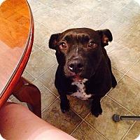Adopt A Pet :: Lily - Schaumburg, IL