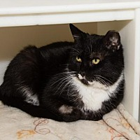 Adopt A Pet :: Checkers (2) - Ashland, MA