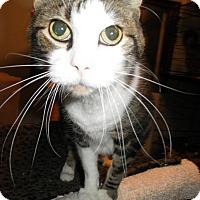 Adopt A Pet :: Guiness - Milwaukee, WI