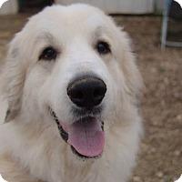 Adopt A Pet :: Jessie - Hagerstown, MD
