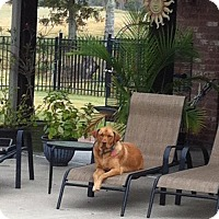 Adopt A Pet :: Bailey (Owner Surrender) - Philadelphia, PA