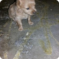 Adopt A Pet :: SMALL FRY - Chandler, AZ