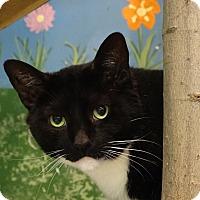 Adopt A Pet :: Cat - Elyria, OH