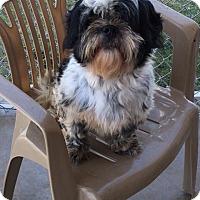 Adopt A Pet :: Yani - Aurora, CO