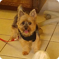 Adopt A Pet :: Stormy - Conroe, TX