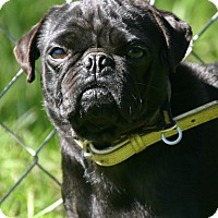 Adopt A Pet :: Elise - Waldorf, MD