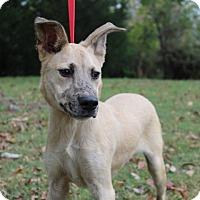 Adopt A Pet :: Carter - Conway, AR