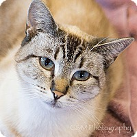 Adopt A Pet :: Blue - Burlingame, CA