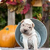 Adopt A Pet :: Leonardo - Scarborough, ME