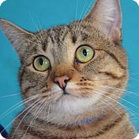 Adopt A Pet :: Wren - Visalia, CA