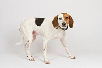 Hound (Unknown Type) Dog for adoption in Richmond, Virginia - Rosie