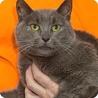 Adopt A Pet :: Zoe - Elmwood Park, NJ
