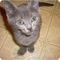 Adopt A Pet :: Taylor - Kirkwood, DE