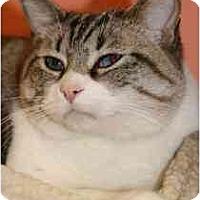 Adopt A Pet :: Hondo - Marietta, GA