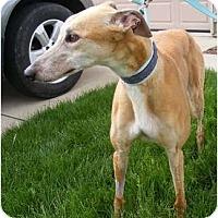 Adopt A Pet :: Reba - Fremont, OH