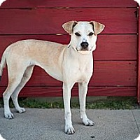 Adopt A Pet :: Grace - Santa Monica, CA