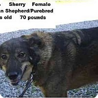Adopt A Pet :: Sherry - RESCUED! - Zanesville, OH