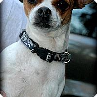 Adopt A Pet :: Bitzi - Vancleave, MS