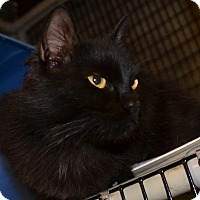 Adopt A Pet :: Nevaeh - Taftville, CT