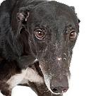 Adopt A Pet :: Vinny