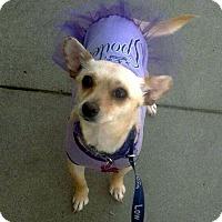 Adopt A Pet :: Twinkie - Winters, CA