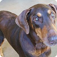 Adopt A Pet :: Horton - Arlington, VA
