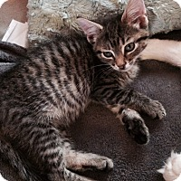 Adopt A Pet :: Mack - Berkeley Hts, NJ