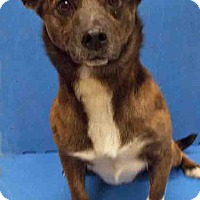 Adopt A Pet :: ADOPTED!!!   Tora - Channahon, IL