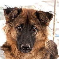 Adopt A Pet :: Little Duffy - Long Beach, NY
