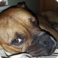Adopt A Pet :: Tigger - Central & West Florida, FL