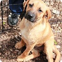 Adopt A Pet :: Regan - Morganville, NJ