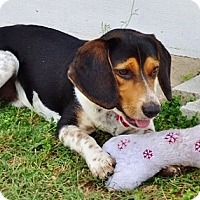 Adopt A Pet :: Buck IV - Tampa, FL