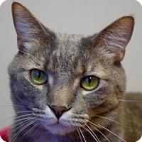 Adopt A Pet :: Felix - Des Moines, IA