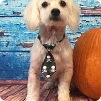 Adopt A Pet :: Jo Jo - Centerville, GA