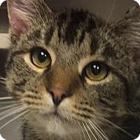 Adopt A Pet :: Jersey - Manchester, NH