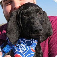 Adopt A Pet :: Wrigley- Foster to Adopt - Wood Dale, IL