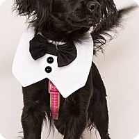 Adopt A Pet :: Blackie - Sherman Oaks, CA