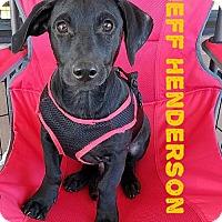 Adopt A Pet :: Olympian Jeff Henderson - San Antonio, TX