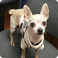 Adopt A Pet :: Chico - Lisbon, OH