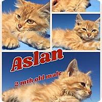 Adopt A Pet :: Aslan - Ravenna, TX